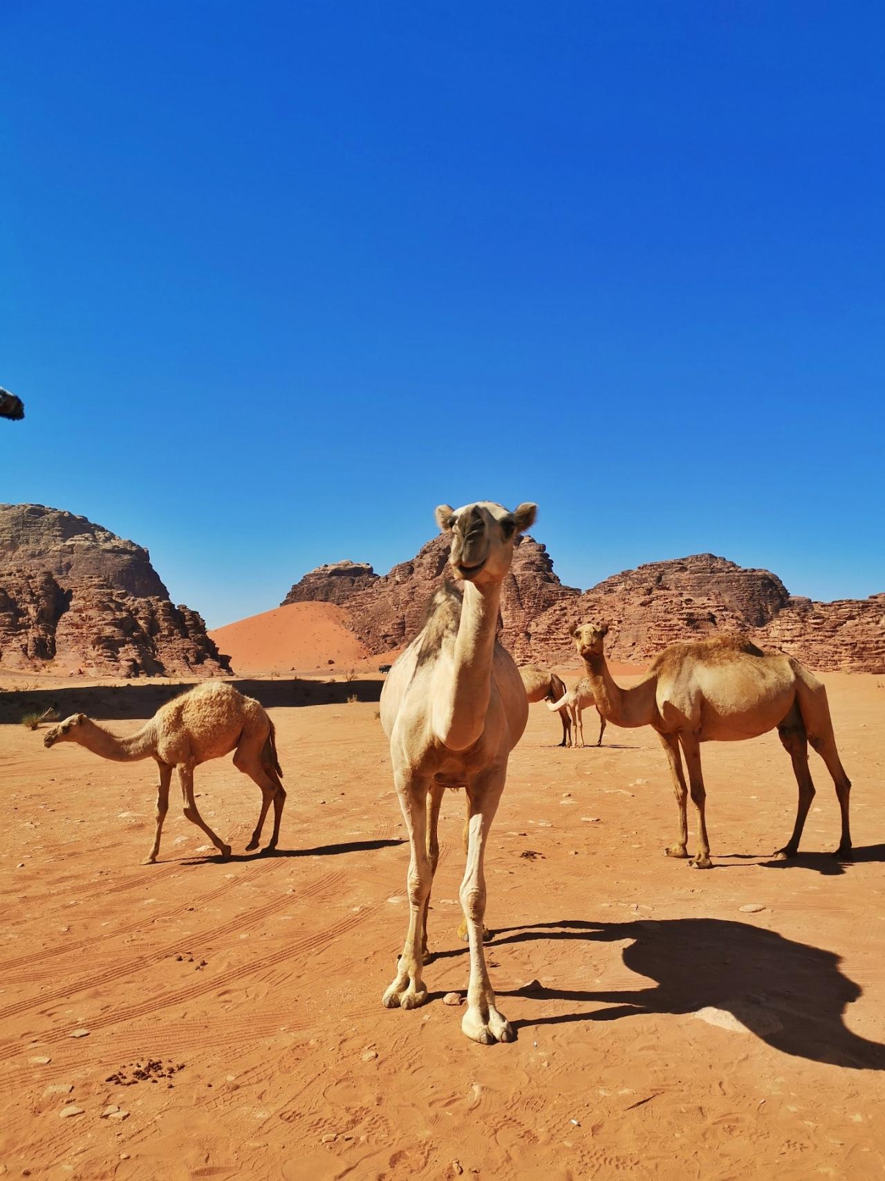 Camile in desert Wadi Rum