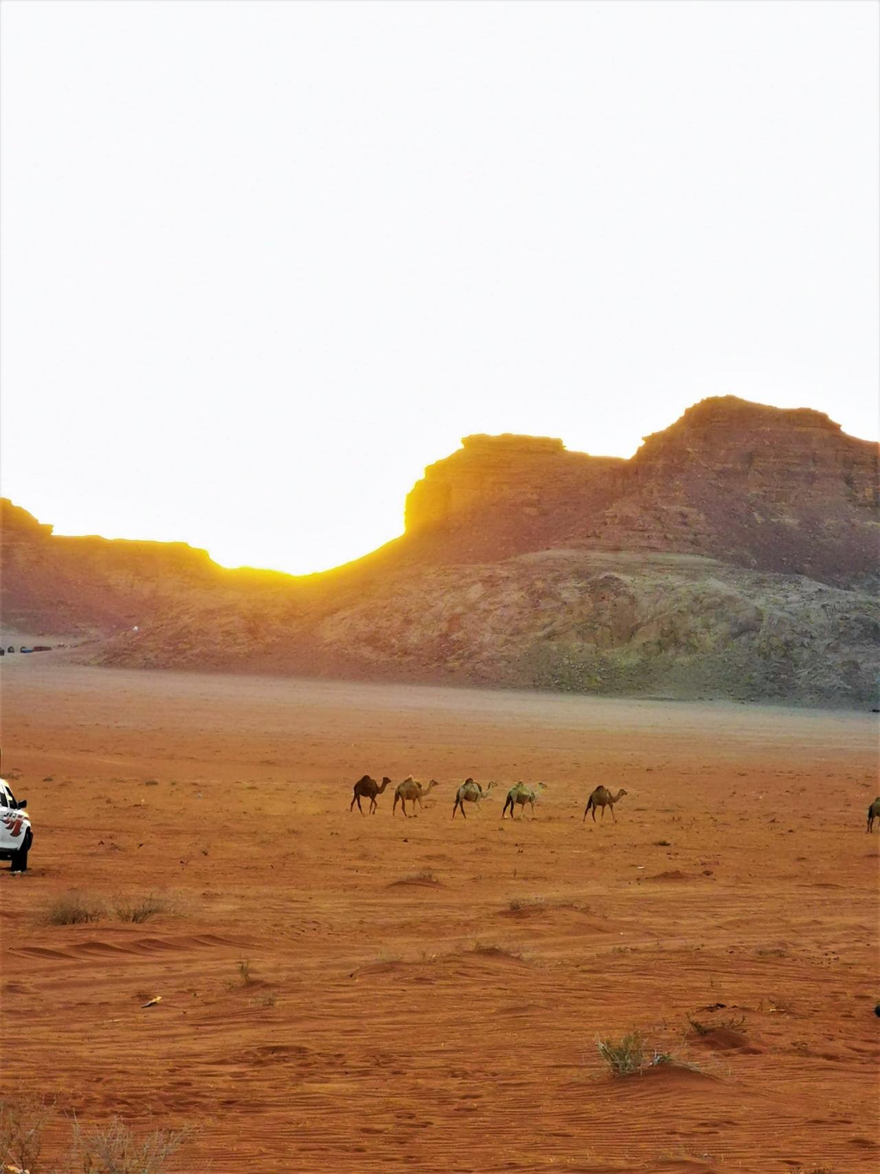 Camile Wadi Rum