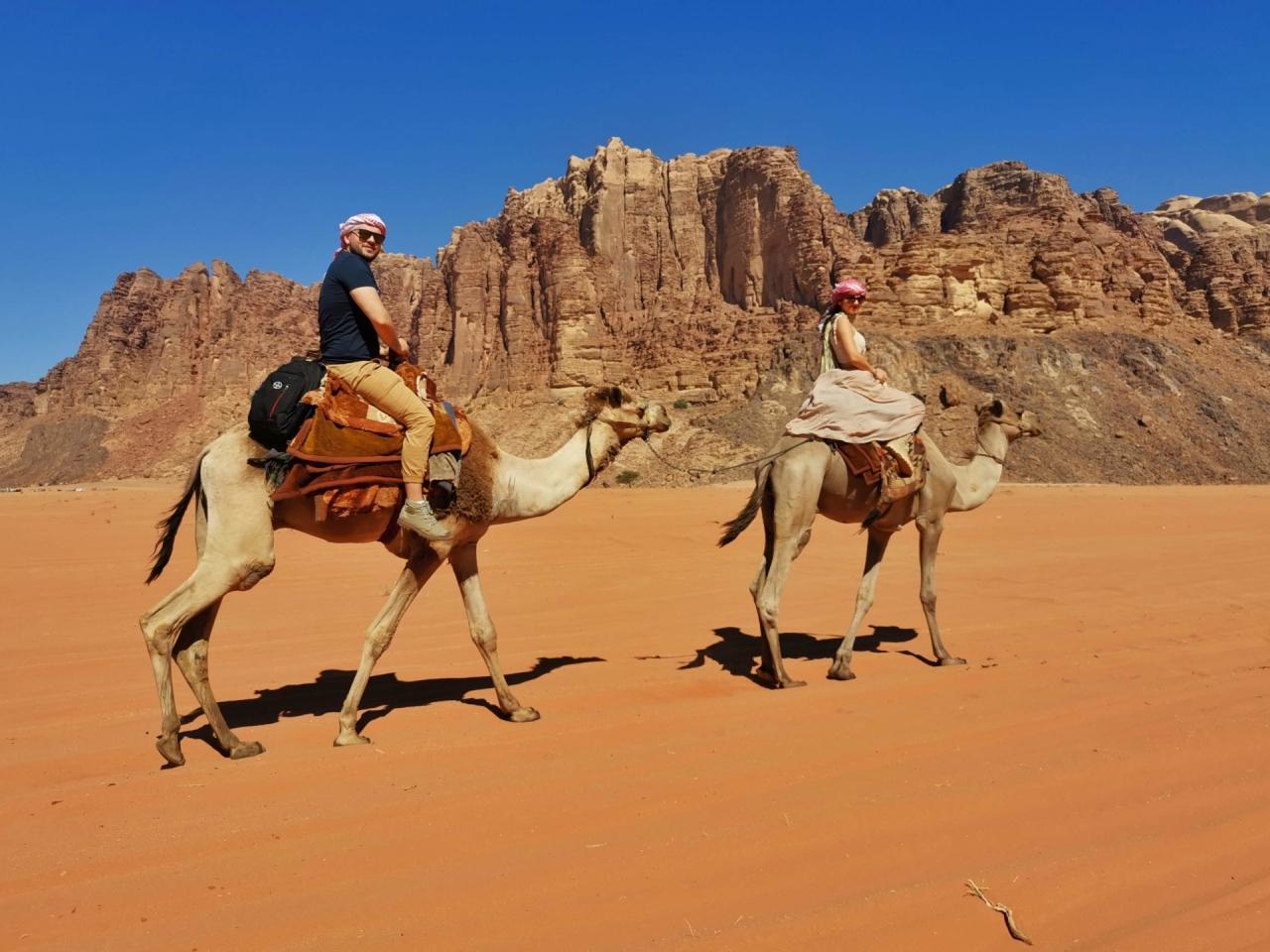 Camile desert Wadi Rum Iordania