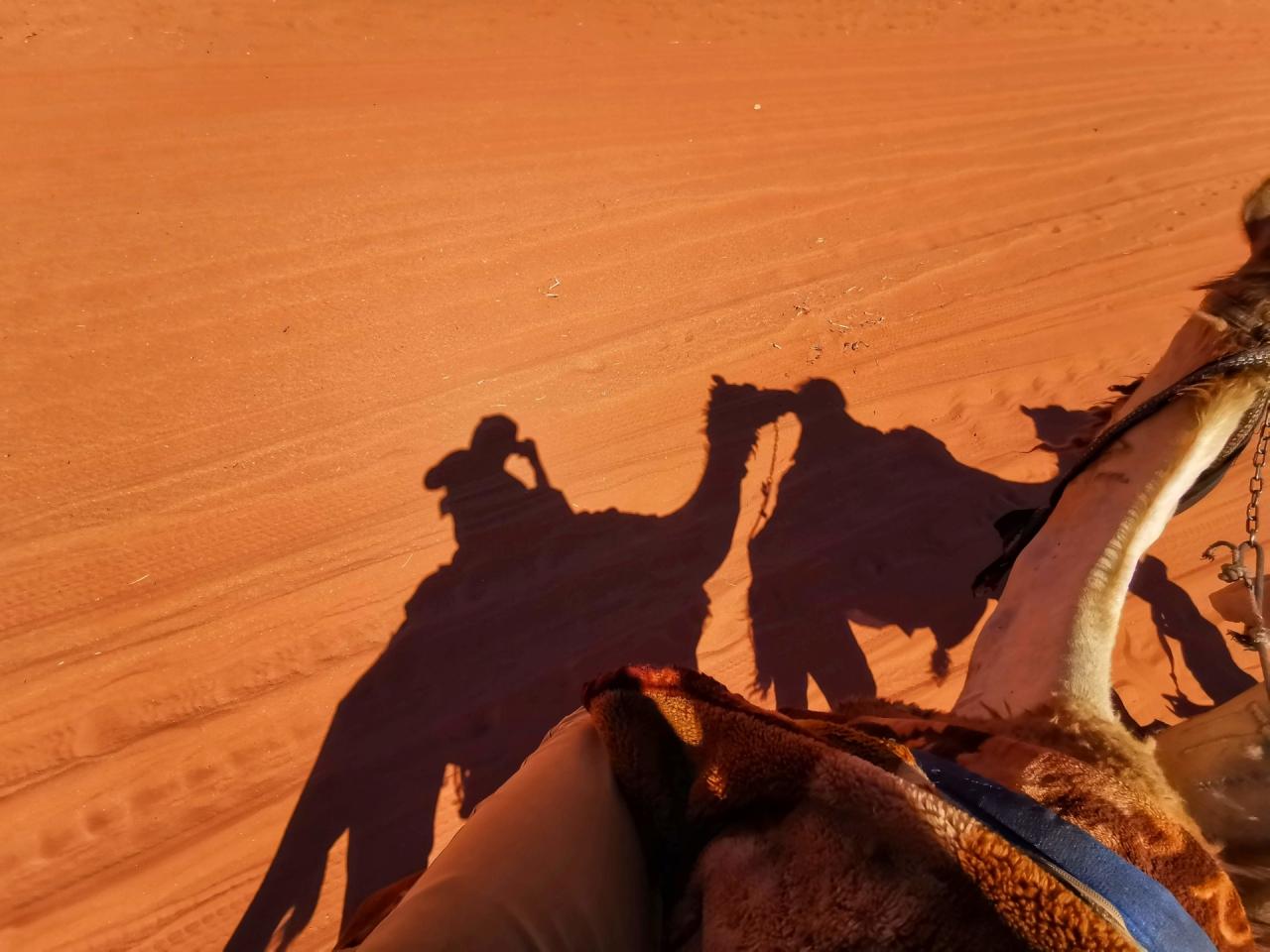 Pe camila in desert Wadi Rum Iordania