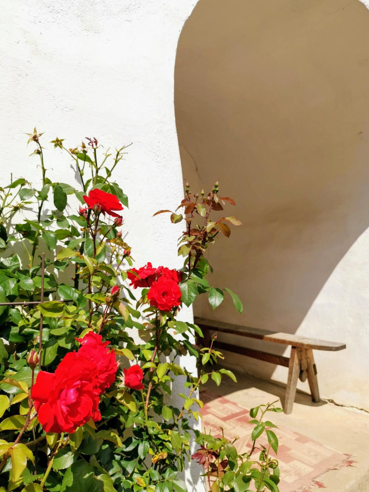 Flori rosii Viscri
